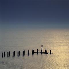 Wooden posts in still lake