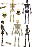 isolated human skeletons collection