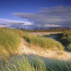 Grasses in sandy beach blowing in wind