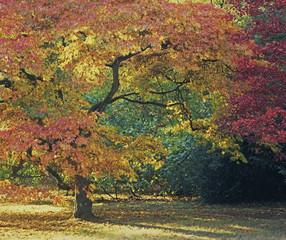 Autumn tree growing in meadow
