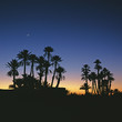 Silhouette of palm trees against sunset sky