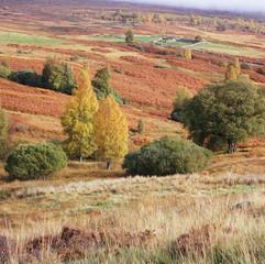 Trees growing in rural landscape