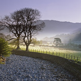 Trees and stone wall in rural landscape