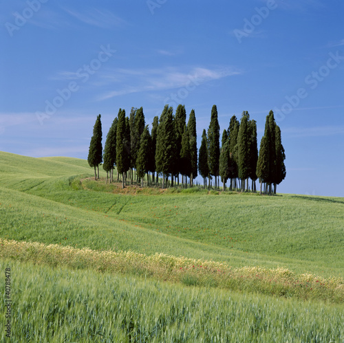 Patch of trees in grassy rural landscape