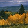 Autumn trees in rural landscape
