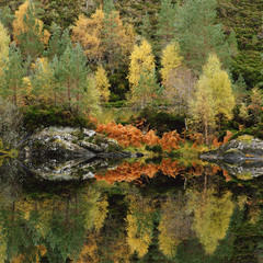 Autumn trees reflected in still lake