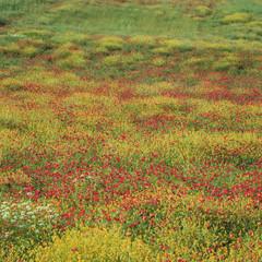 Field of flowers in rural landscape