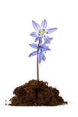 flower grow in the soil