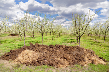 Heap of dung and orchard