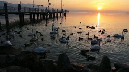 tramonto sul lago dei cigni