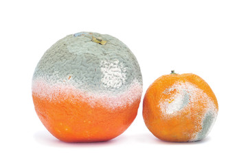 moldy orange and mandarine