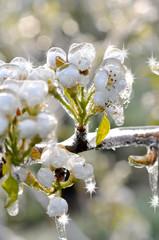 Eiszauber in einer Obstplantage