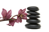 stack stones in balance with beauty orchid isolated