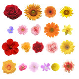 Fototapety 色々な花の素材
