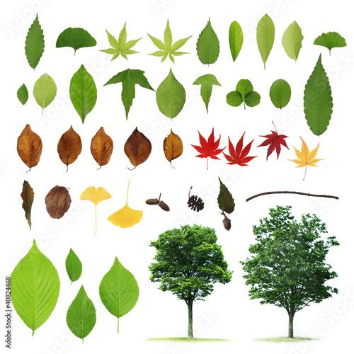 植物の素材