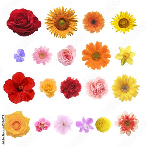 Fotobehang Zonnebloemen 色々な花の素材