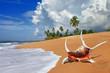 Fototapeta Plaża - Muszla - Wyspa