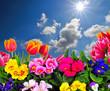 Himmel Frühling Blumen Tulpen