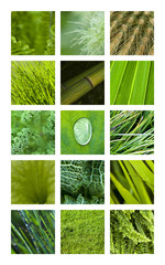 Texture, matière, fond, vert, nature, jardin, végétal