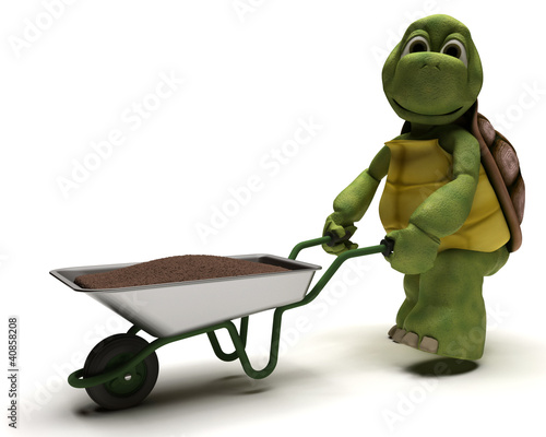tortoise gardener with a wheel barrow carrying soil