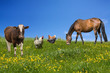 Farm animals grazing