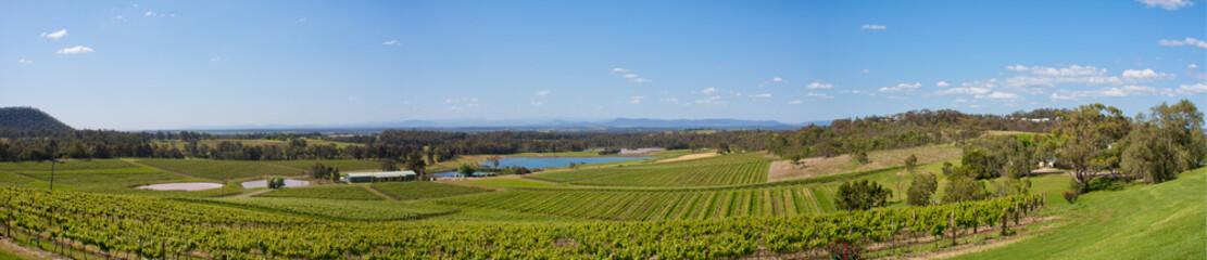 Hunter Valley, Vineyards on hillside Panorama, NSW Australi