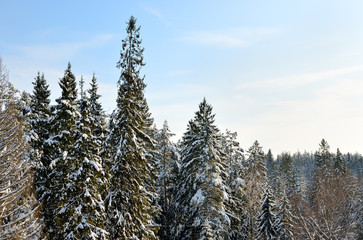 Snow covered sunny winter landscape panorama