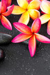 beautiful and colorful Frangipani with zen stone for Spa concept