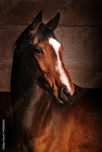 Fototapeten,pferd,braun,bliss,kopf