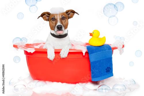 Fototapeta Dog taking a bath in a colorful bathtub with a plastic duck