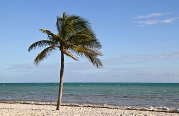 Palme am Strand