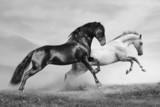Fototapety horses run