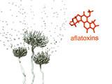 Aflatoxins poster