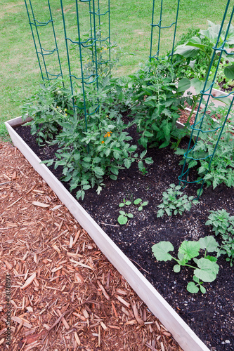 Raised Garden Tomatoes