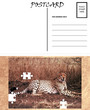 Empty Blank Postcard Template Africa Cheetah Puzzle Image