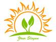 Sonne und Pflanze
