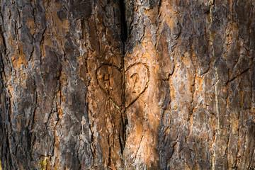 Сердце на коре дерева