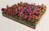 Fiori rossi, porpora, arancioni terreno sezione erba poster