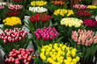 Exhibition of tulip varieties