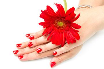 mani di donna con smalto rosso