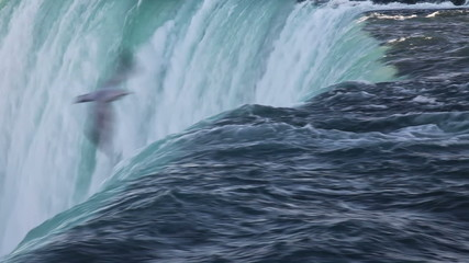 Niagara falls closeup , with bird flying over
