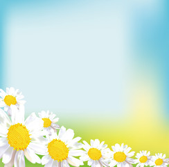 chamomile field flower bouquet greeting card