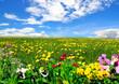 Landschaft Wiese Himmel Frühling Blumen