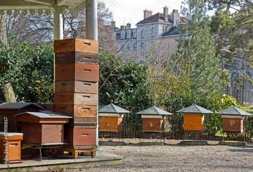 ruches en ville (Paris France)