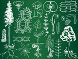 Biology plant sketches on school board - botany illustration poster