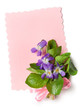 Bouquet of wild violets with a pink ribbon and paper