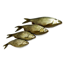 Closeup of four raw river fish