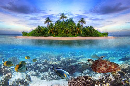 Poster Marine life at tropical island of Maldives