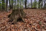 Deutscher Wald