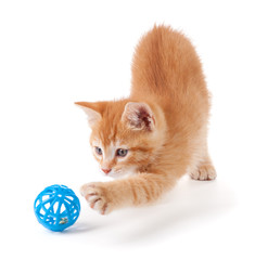 Cute orange kitten playing on a white background.